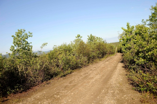 Stampede Road