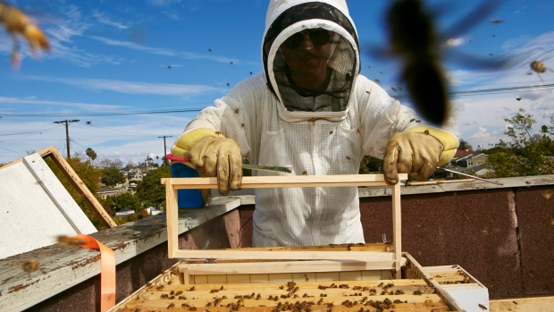 Can citizen science save the honeybee?