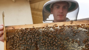 In this photo taken Friday, Jan. 31, 2014, HoneyLove.org founder, and beekeeper Rob McFarland inspects his beehive, which he has kept on the roof of his Los Angeles house for the past three years.  (AP / Damian Dovarganes)