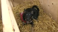 Rocky Mountain Animal Rescue - doghouse