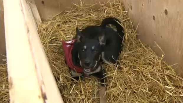 A dog enjoying the comforts of one of Rocky Mountain Animal Rescue's doghouses
