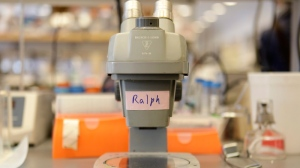 The microscope that Ralph Steinman used in the early 70's to make his discovery about dendritic cells is displayed in his lab in New York, Monday, Oct. 3, 2011. (AP / Seth Wenig)
