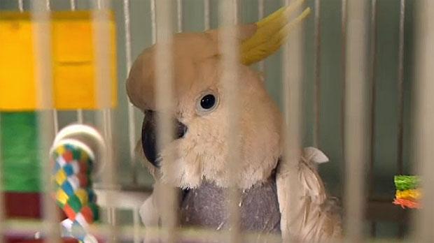 Birdline Parrot Rescue, parrots die, Parrot death,