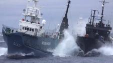Sea Shepherd SOciety