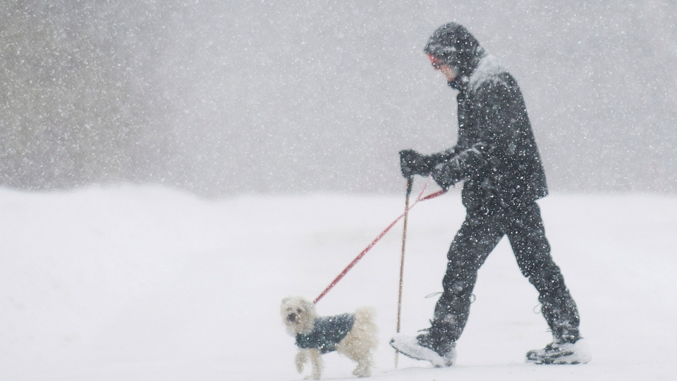 A man walks a dog along a street during an early spring snowstorm near Montreal, Saturday, March 22, 2014. (Graham Hughes / THE CANADIAN PRESS)