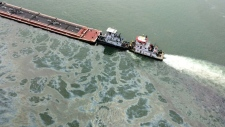 Texas oil spill near bird habitat