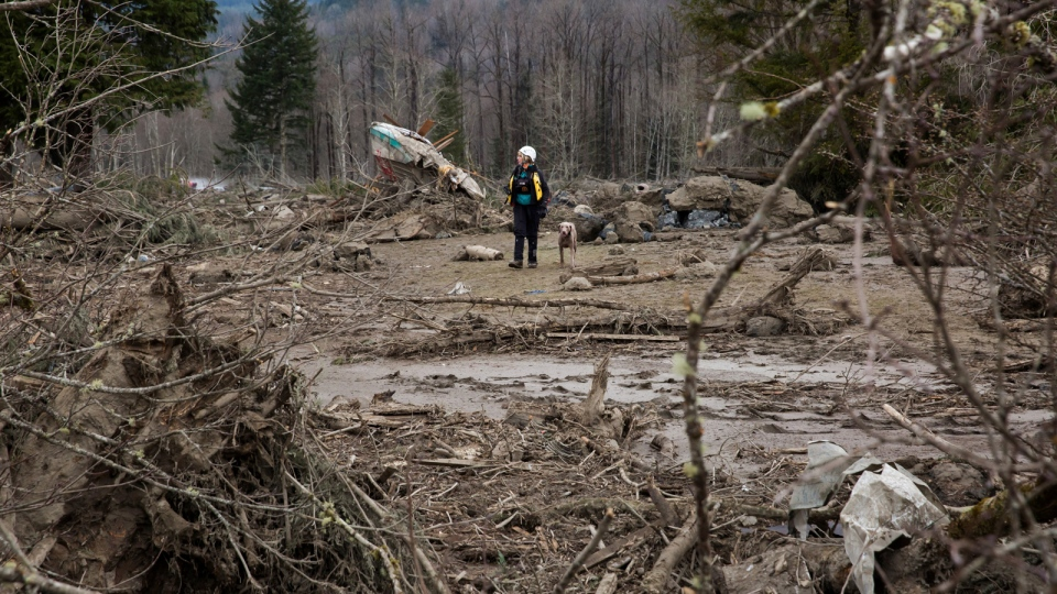 A rescue worker with a search dog works diligently in the debris field caused by the massive mudslide on Saturday, above the North Fork of the Stillaguamish River onto Highway 530, as recovery efforts continue, near Oso, Wash., on Tuesday, March 25, 2014. (AP / The Seattle Times, Marcus Yam)