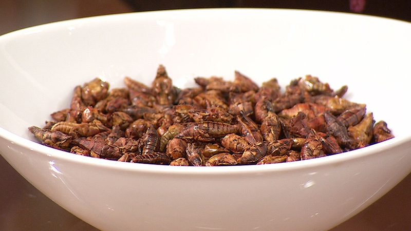 The Aspire Food Grou brought in this bowl of high-protein toasted beetles.