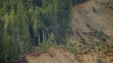 Edge of the mudslide near Darrington, Wash.