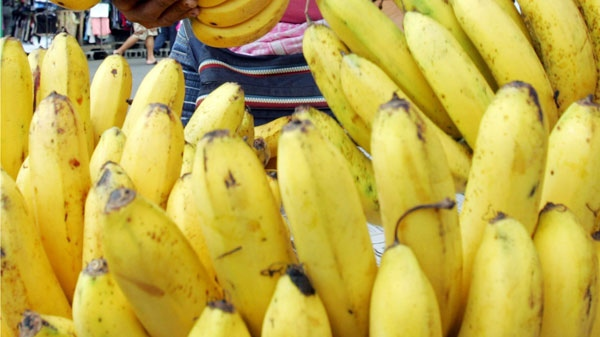 A fruit vendor arranges bananas for sale Saturday, Sept. 6, 2008, in a public market in Manila, Philippines. (AP Photo/Pat Roque)