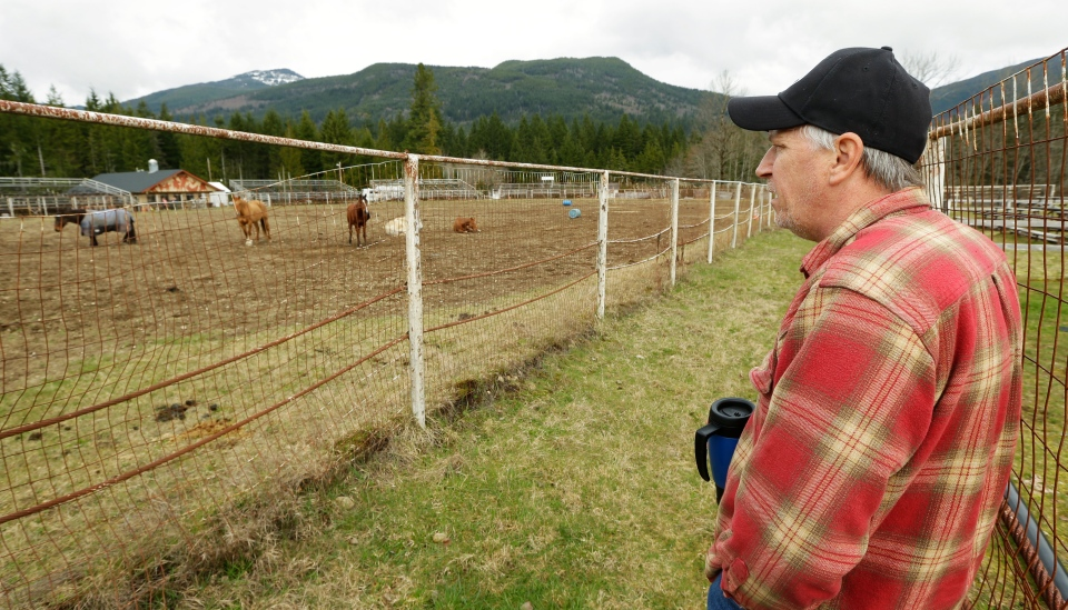 Tom Gent looks out over horses kept in the rodeo area of the Darrington Fairgrounds in Darrington, Wash., Wednesday, March 26, 2014. Gent is caring for horses who were displaced by the massive mudslide that hit the area. (AP / Ted S. Warren)