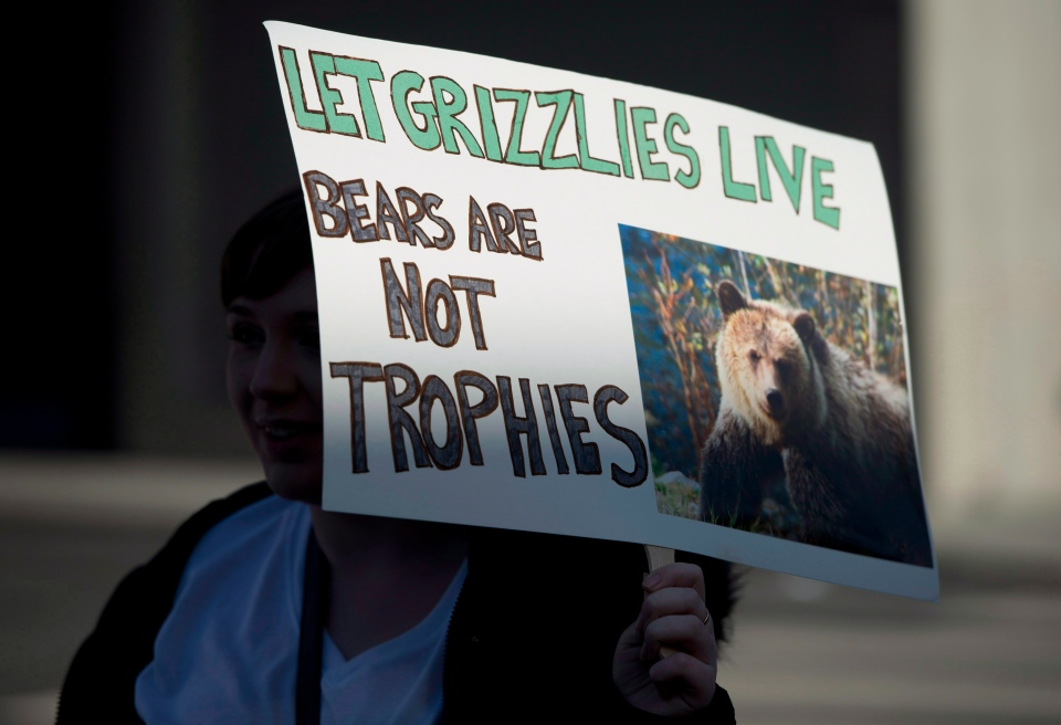 People gather to raise awareness and to protest the grizzly bear trophy hunt in British Columbia during a rally in North Vancouver, B.C. Monday, Jan. 20, 2014. (Jonathan Hayward/ THE CANADIAN PRESS)