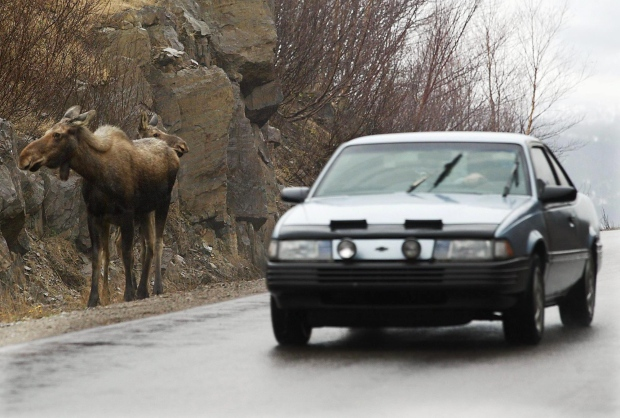 Moose-collisions class-action lawsuit begins