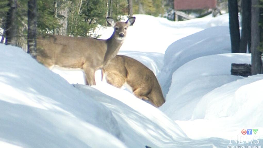 CTV Northern Ontario: Deer helpers