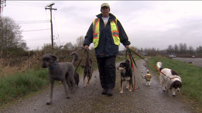 Brenda Stockel, a dog walker with Bark and Fly Pet Services, says dogs who deviate from the marked trails on McDonald Beach Park are bit frequently. (CTV)