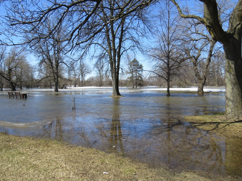 Walking along Riverside Drive in Ottawa South on Wednesday, Apr. 9, 2014. Water extremely high. (Sandi Coy/MyNews)