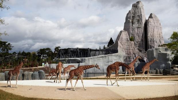 Zoo De Beauval Team Building