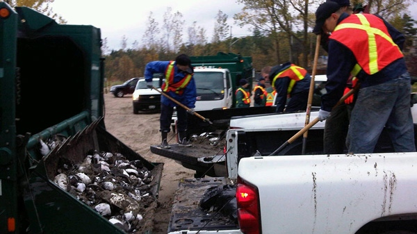 Dead bird cleanup begins