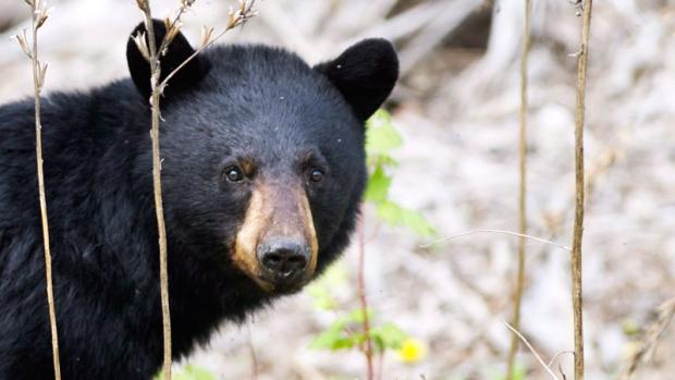 Court dismisses arguments against spring hunt