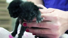 Pair of kittens accidentally mailed found safe