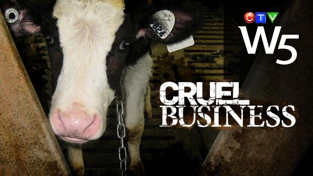W5 teaser - Cruel Business