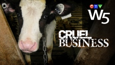 W5 teaser - Cruel Business