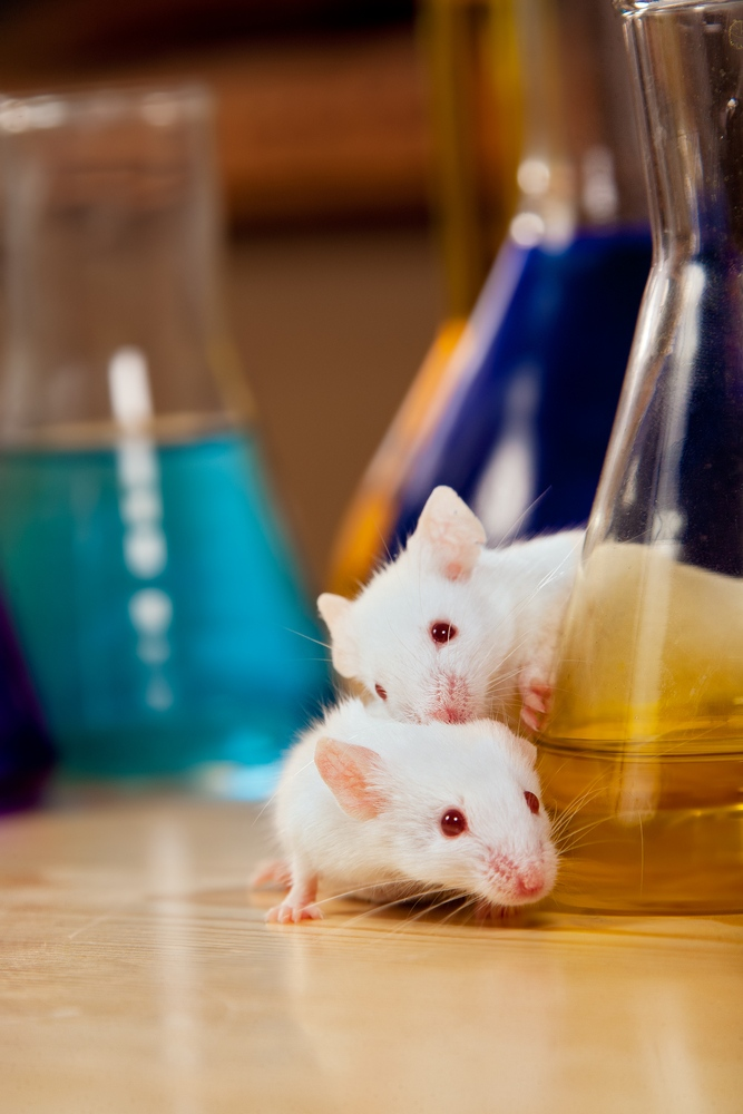 Memory loss in mice with Alzheimer's