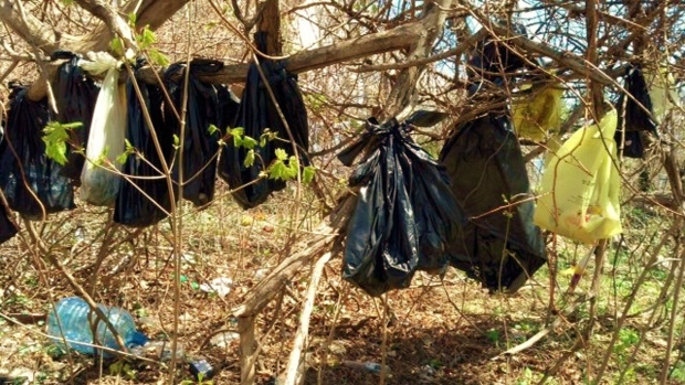 Dead cats hanging from a tree in Yonkers, N.Y.