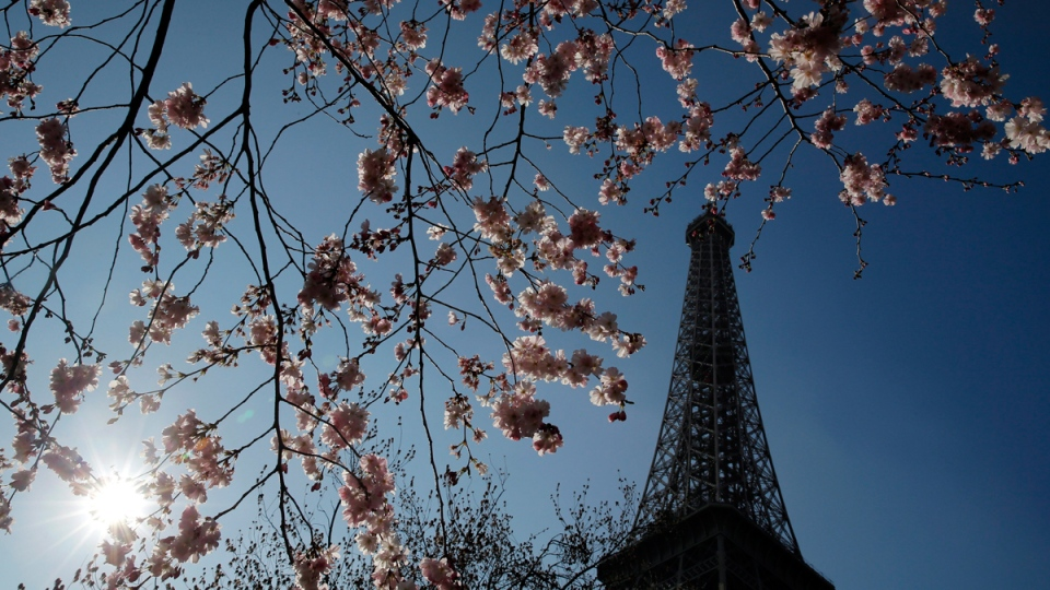 The Eiffel Tower is seen next to a flowering tree in Paris, Monday, March 10, 2014. (AP / Christophe Ena)