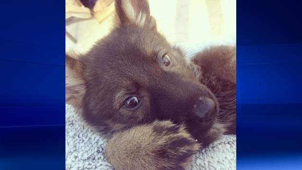 Lauren Conrad has new pet puppy