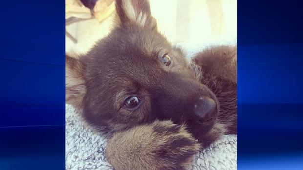 Lauren Conrad has new pet puppy