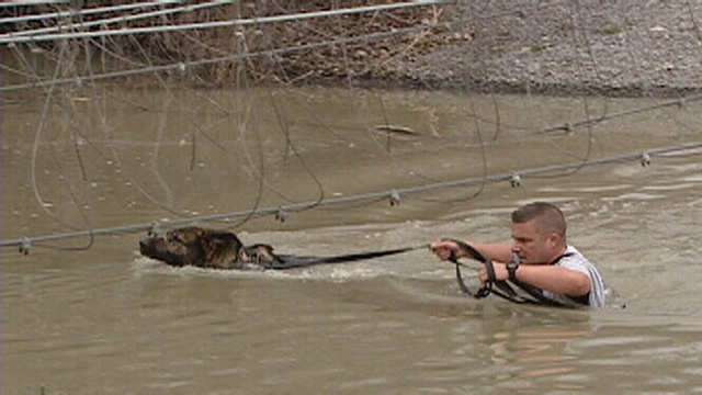 A police dog and his handler in the water.