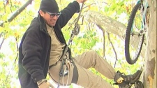 Occupy Victoria protester Lyle Barrette scales a tree in Centennial Park. Nov. 7, 2011. (CTV)