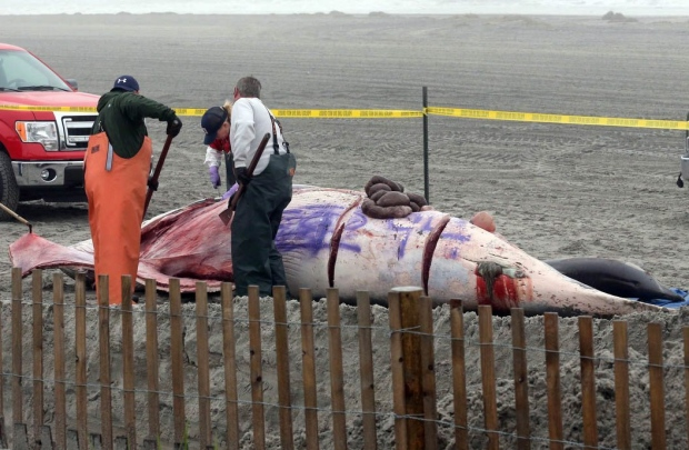 Dead whale tagged with graffiti