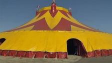 Big Top, circus, Crossroads Market, Royal Canadian