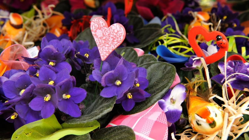 In this file photo, bouquets of flowers stand in a gardening centre, in Dresden, Germany, in preparation for Mother's Day, May 7, 2009. (AP Photo/Matthias Rietschel, file)