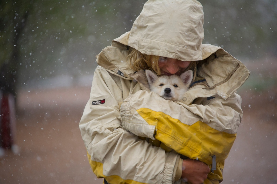 Cassandra Cantu shields her seven-week-old puppy 'Kamala' from the snow as she walks with friends in the Bear Creek Dog Park in Colorado Springs, Colo. Sunday, May 11, 2014. (AP / The Gazette, Mark Reis)