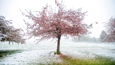 Severe spring weather hits U.S.