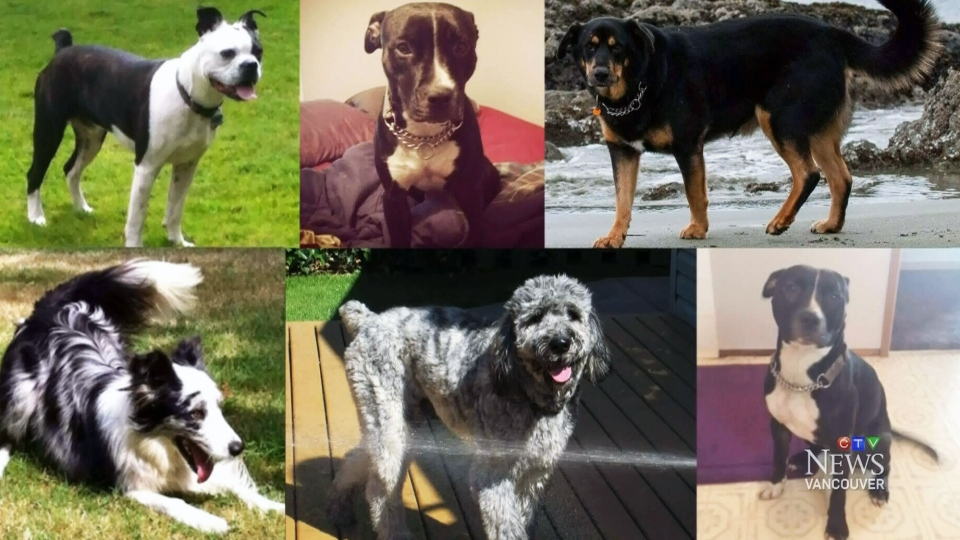 The 6 dogs pictured disappeared from a dog-walker's truck in a dog park.