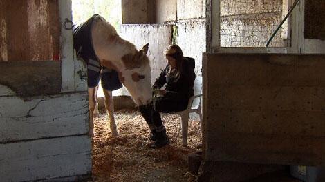 Amy Rogers tends to her horse Splash in Ladner, B.C. Nov. 15, 2011. (CTV)