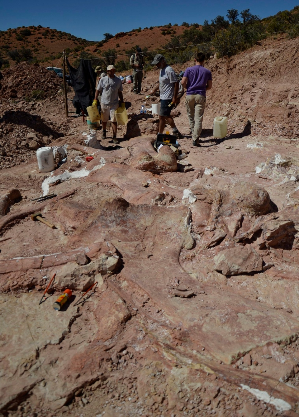 This photo released on Saturday, May 17, 2014 shows a team of paleontologists working at the site where the bones of a sauropod dinosaur were unearthed, near Trelew, Argentina.  (AP Photo/Museo Paletontológico Egidio Feruglio)