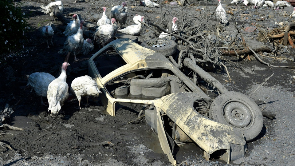 Turkeys move around a a car buried in mud and rubble after a landslide at the village of Topcic Polje, near the Bosnian town of Zenica, 90 kilometres north of Sarajevo, Bosnia-Herzegovina, Tuesday May 20, 2014. (AP / Sulejman Omerbasic)