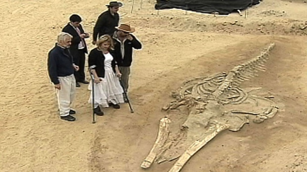 In this image made from Nov 11, 2011 video, Minister of National Assets Catalina Parot, using crutches, looks at a prehistoric whale fossil unearthed in the Atacama desert near Copiapo, Chile.