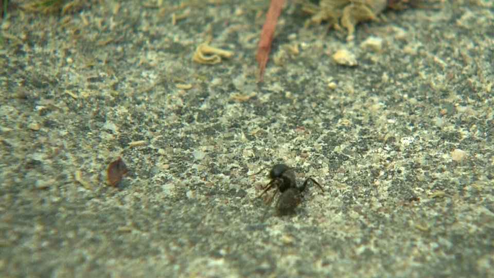 With the arrival of warmer temperatures, pest control companies are experiencing high volumes of callers asking to be rid of the pesky insects.