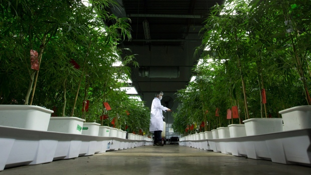 the legalization of marijuana as a solution to its problems Although medical marijuana is legal in a few states of the united states, it is one of many illegal drugs in most jurisdictions  legal problems, and achieving .