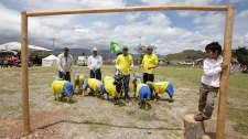 Sheep play soccer in Colombia
