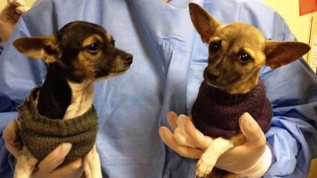 Two Parvo Ward puppies