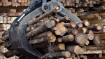 Workers pile logs at a softwood lumber sawmill on Nov. 14, 2008 in Saguenay, Que. (THE CANADIAN PRESS / Jacques Boissinot)