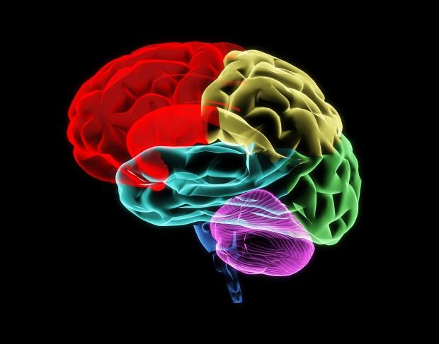 Colourful brain