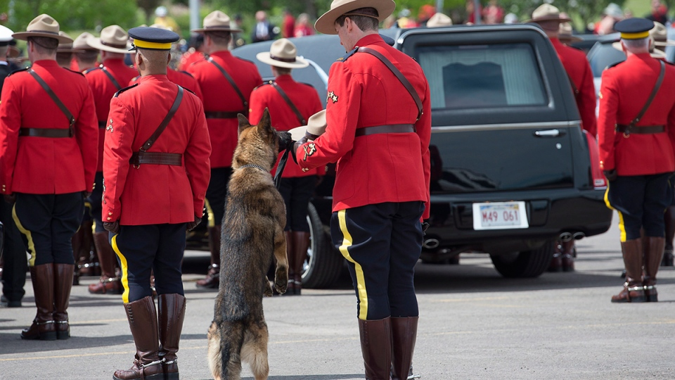 K9 dog Danny, sniffs the stetson of his partner, slain Const. David Ross' during the funeral procession for the three RCMP officers who were killed on duty, at their regimental funeral at the Moncton Coliseum in Moncton, N.B. on Tuesday, June 10, 2014. (Andrew Vaughan / THE CANADIAN PRESS)